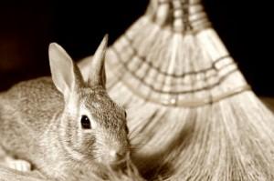 Dust-Bunny
