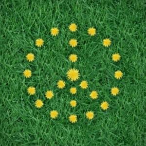 peace-symbol-flowers