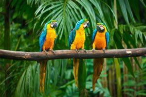 parrots 3 sized